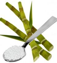 Amylase: Thủy phân tinh bột ngành đường